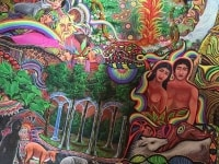 Spirit Vine Ayahuasca Retreats