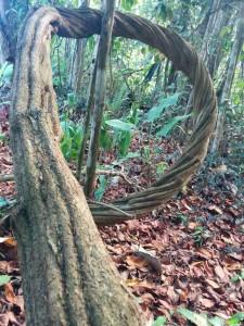 Free ayahuasca retreat program at Spirit Vine center